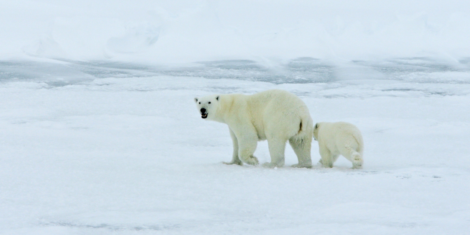 usfws_polar_bear_plan_2x1