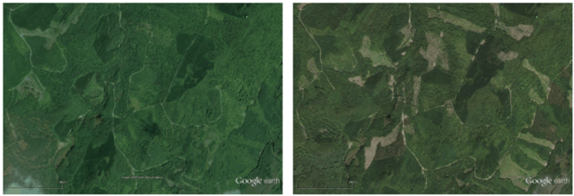 Figure 2. Virgin paper production requires timber harvesting across large areas of forests, as seen in this satellite image of a site in central Maine within the fiber basket of the Somerset Mill. Left: The site in September 2007. Right: The same site in September 2013. Timber harvesting causes disturbances to the forests, resulting in forest carbon storage loss and negative impacts on biomes and key species. (Source: SCS Global Services' LCA Study)