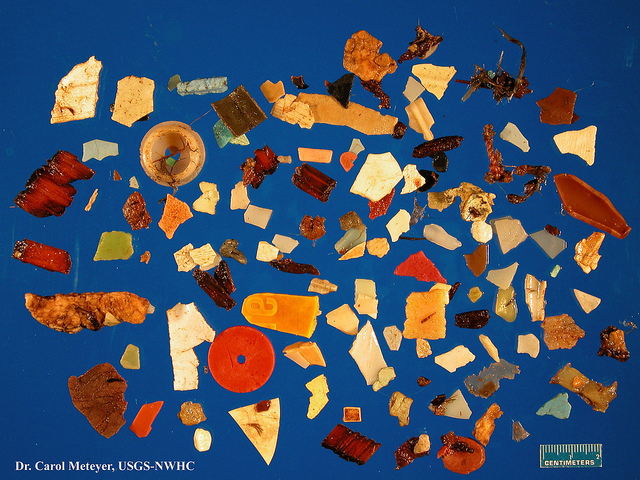All these pieces of plastic were removed from the stomach of a single north fulmar, which is a type of seabird. (Photo: Carol Meteyer / USGS)