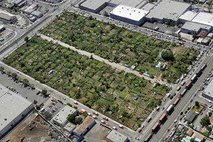 An image of what the green plot could look like. (Photo courtesy of John Quigley.)
