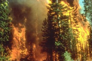 Photograph of California wildfire. (Photo Credit: Bureau of Land Management)