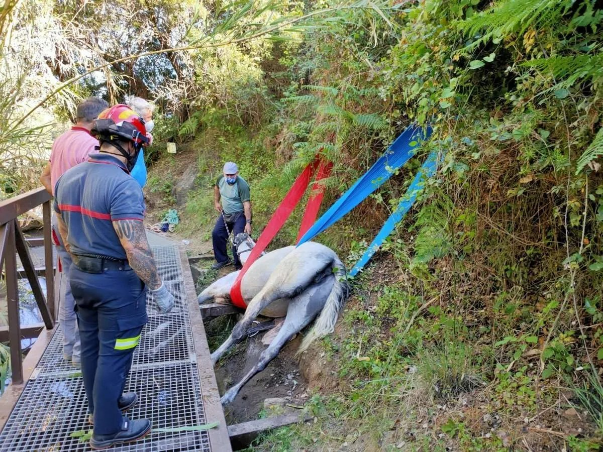Dona being rescued on Monday