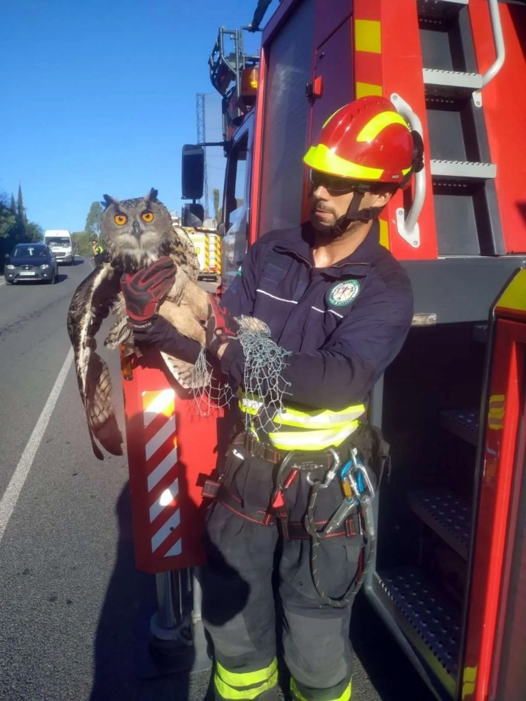 The rescued Eagle Owl