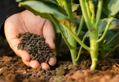 Types of Organic Fertilizers | Planet Natural