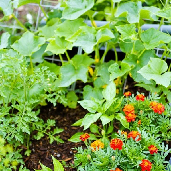 How to Plan a Vegetable Garden  Planet Natural