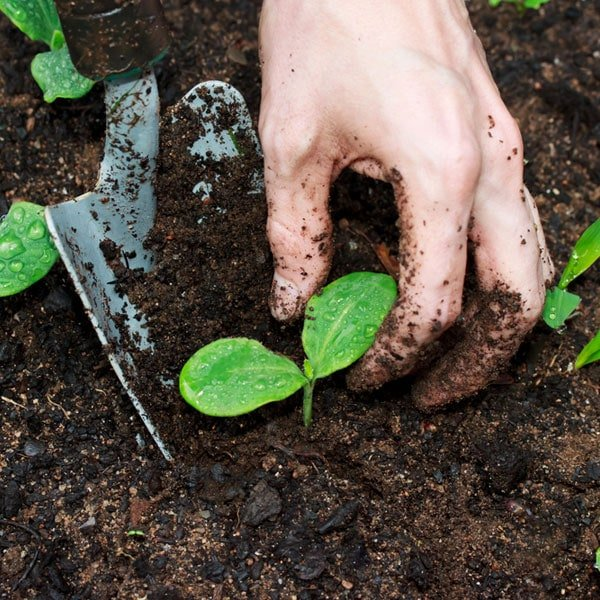 Composting Myths Busted Planet Natural
