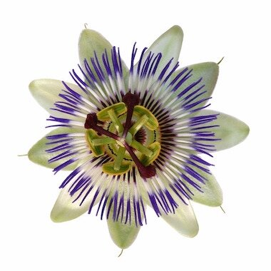 Passiflora supplements are used effectively for anxiety conditions