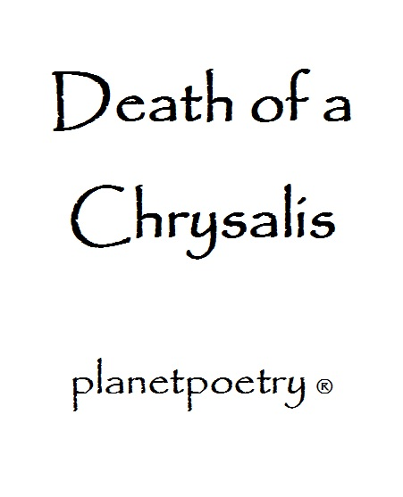 Death Of A Chrysalis a Poem by planetpoetry