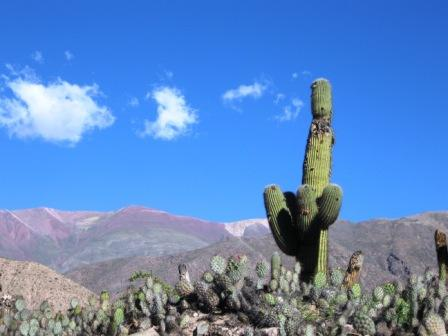 Cactus gigante sulla strada per Purmamarca, provincia del Nord-Ovest