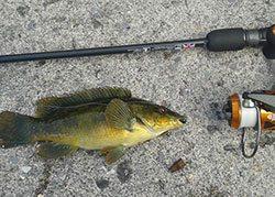 hard rock fishing