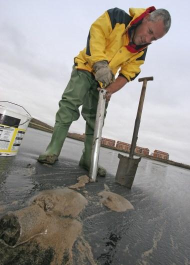 using a pump for black lugworm