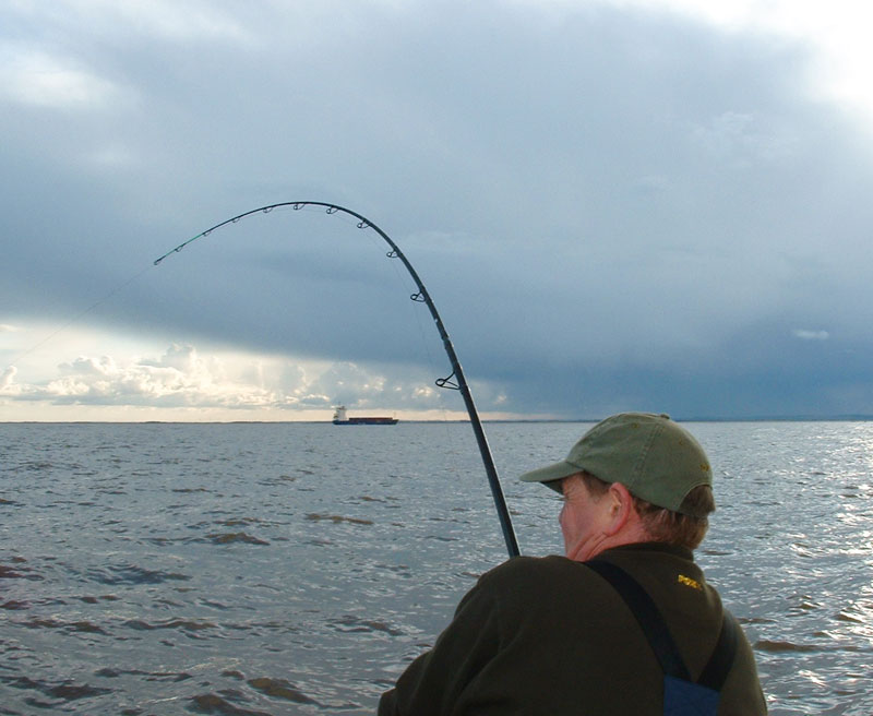 an uptide rod bends into a fish in tide