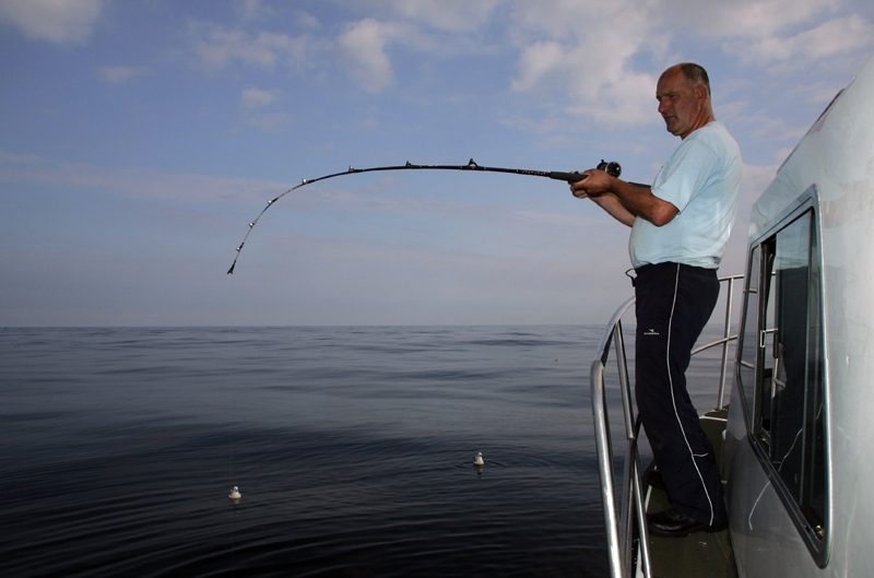 an angler bends into a cod taken on a shad