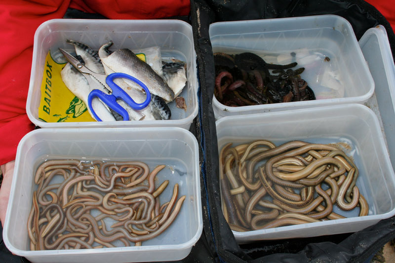 a selection of baits for flounders