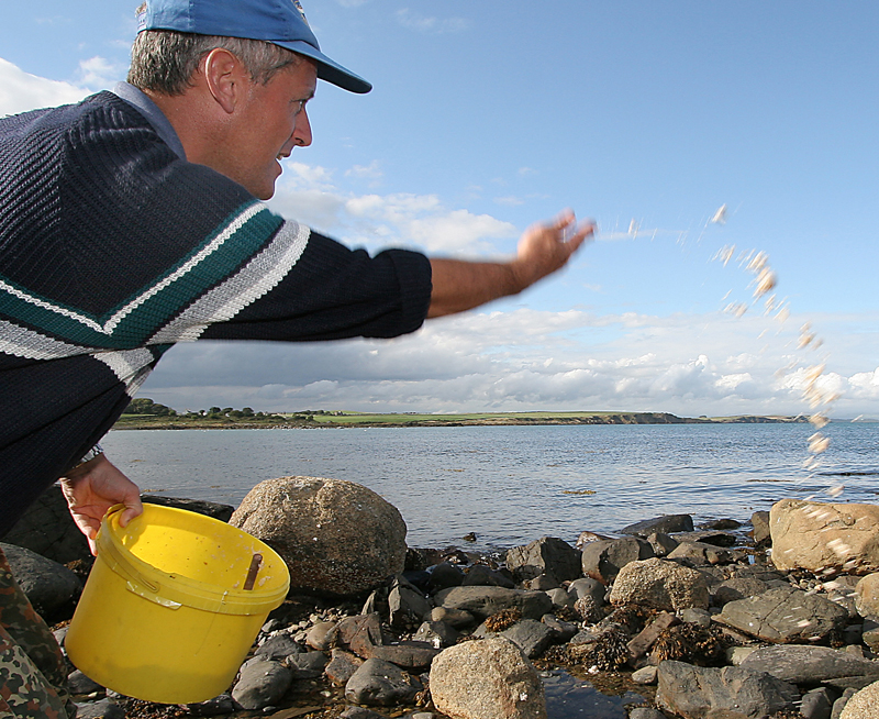 throwing groundbait for mullet