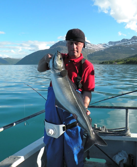 Steve Walker with a coalfish in Norway