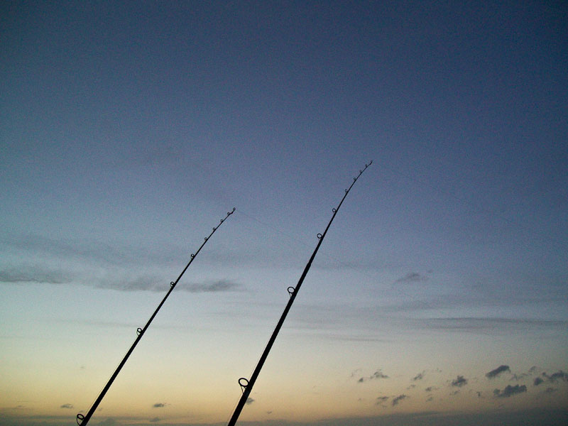 rod tips at twilight