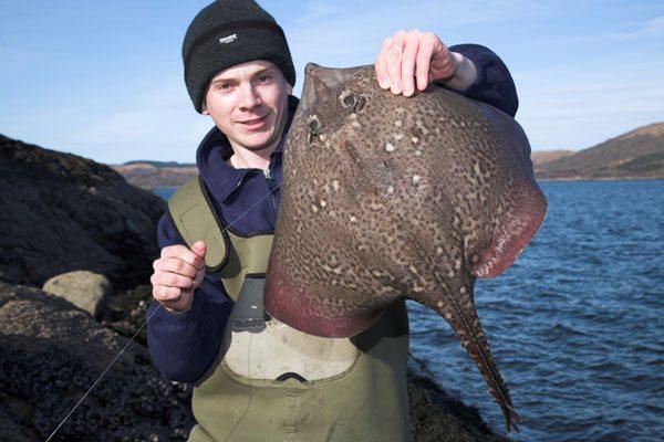 species ID thornback ray