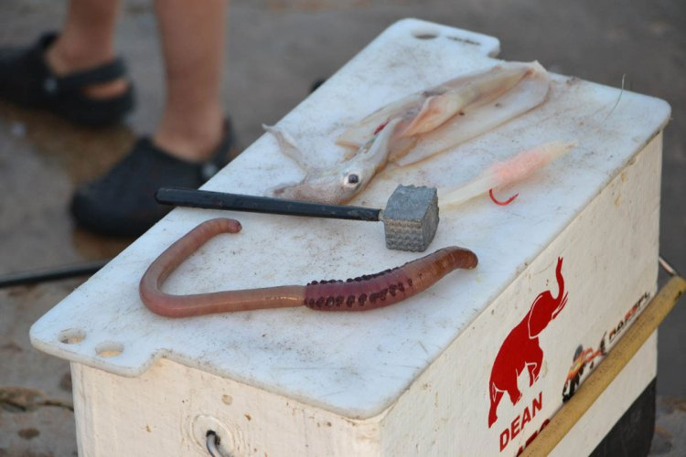 Bloodworm Squid Teaser