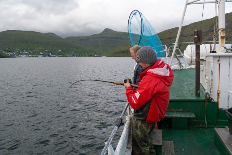 plaice fishing Faroe Islands Ally into a fish