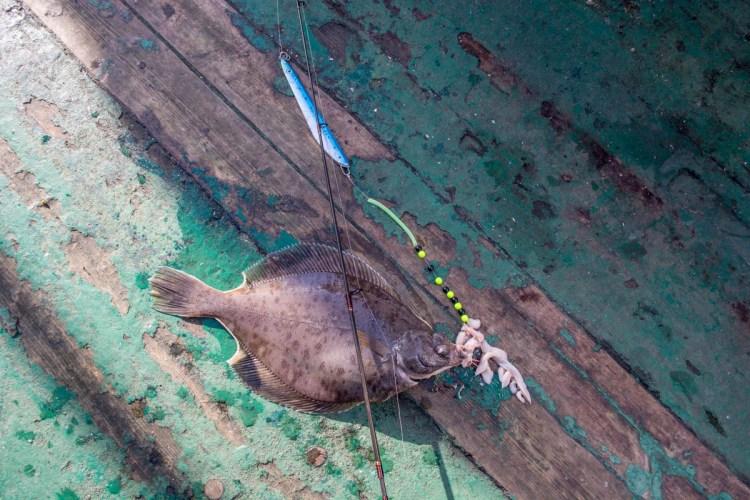 plaice fishing Faroe Islands baited pirk
