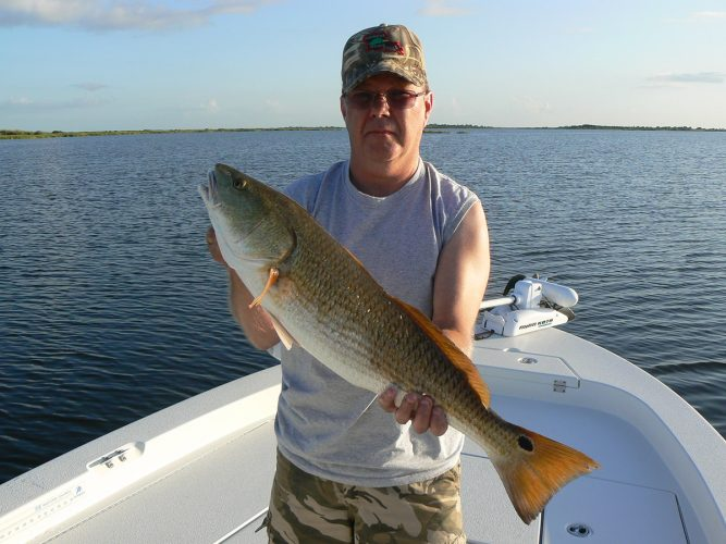 a red drum that fell for a spoon