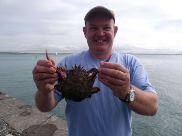 Holyhead Breakwater species session spider crab