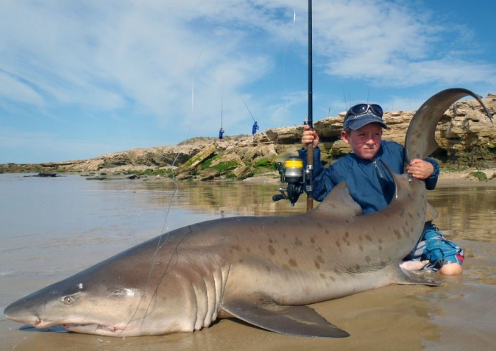 Daniel Dickinson South Africa shark
