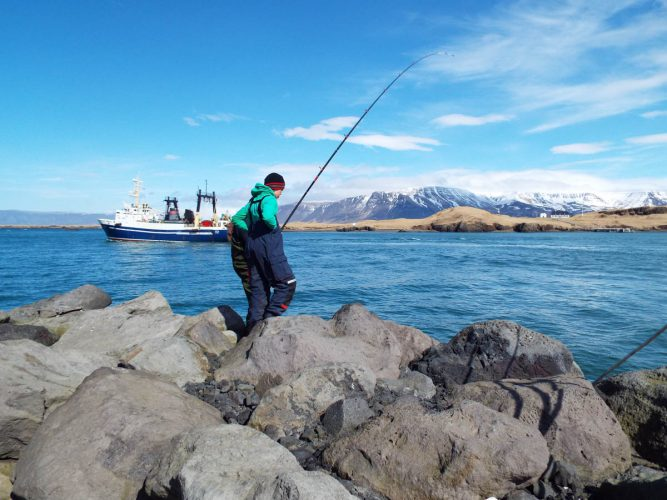 shore fishing Iceland magnificent backdrop