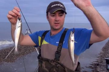 two whiting from the shore