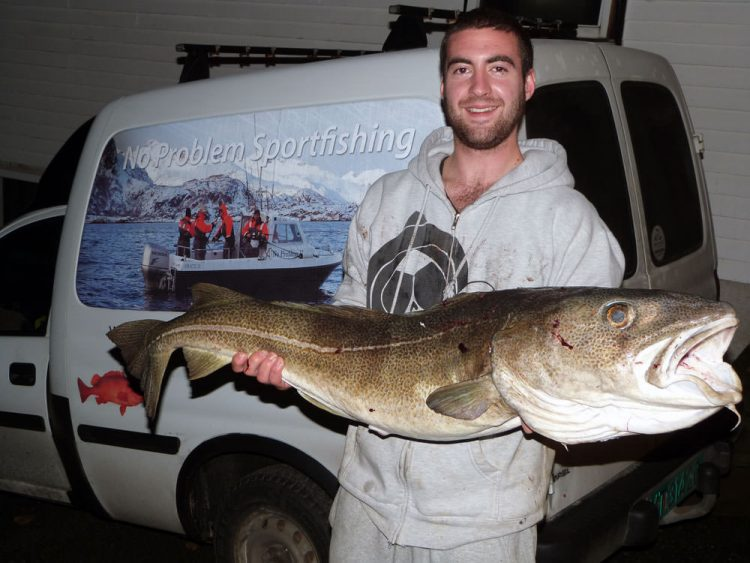 ashley-shore-caught-cod-12-5kg