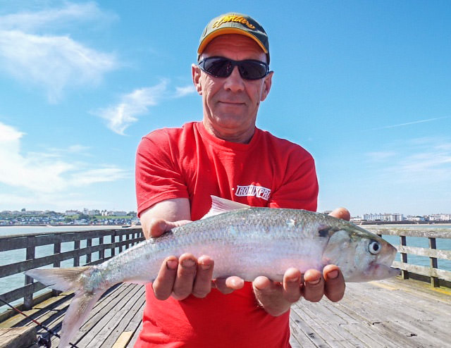 Colchester angler Joe Mcdonald with one of our summer species, a fine shad from Walton pier