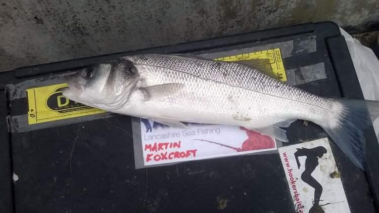 A bass for Martin Foxtrot