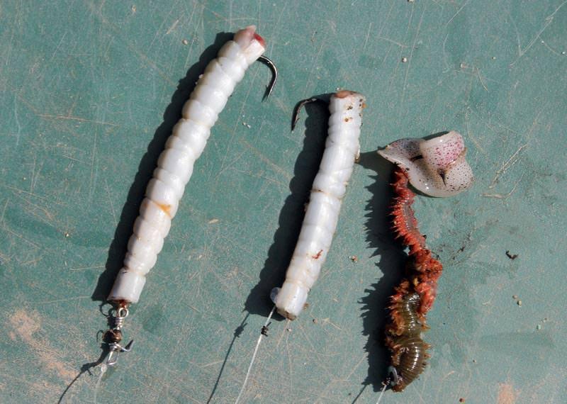 three baited hooks for dogs
