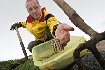 Steve Walker checks his fresh white ragworm