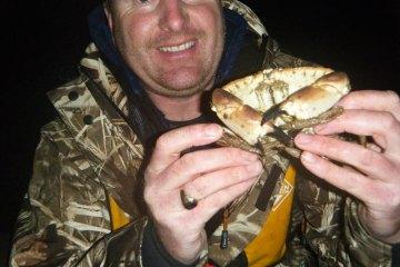 ALDERNEY species mission: crab