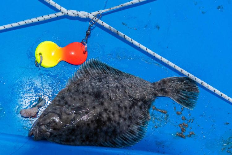 Flounder on a Buttlöffel Rig