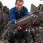 a dark coloured Beara ballan wrasse