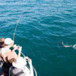 porbeagle shark beside boat