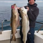 two big pollack on Red Gill EVO sandeels