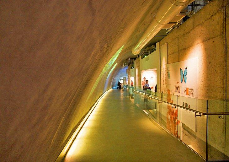 london natural history museum darwin centre - London's Natural History Museum
