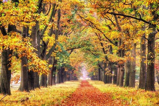 Cosa vedere nei Paesi Bassi Hoge Veluwe National Park