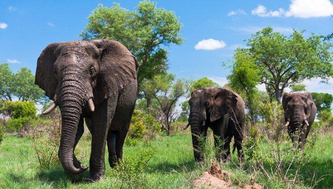 Kruger National Park, Mpumalanga and Limpopo Provinces