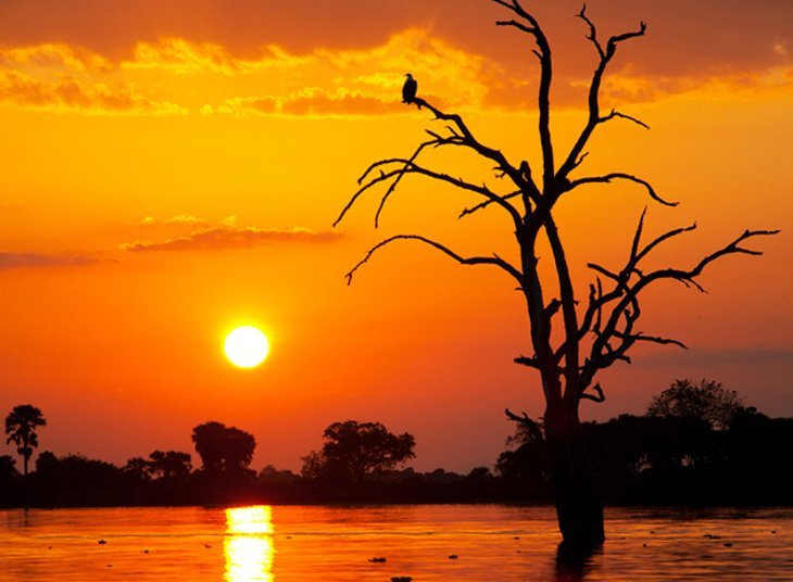 The diversity of bird life in Selous includes over 350 recorded species.