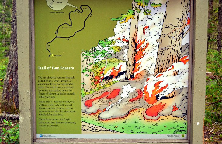 Interpretive information along the Trail of Two Forests
