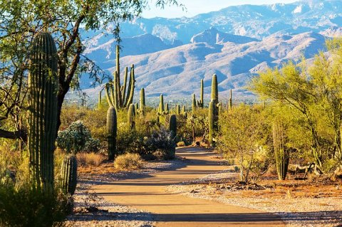 17 Top-Rated Tourist Attractions in Tucson, AZ   PlanetWare