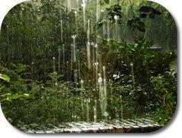 Rainy backyard