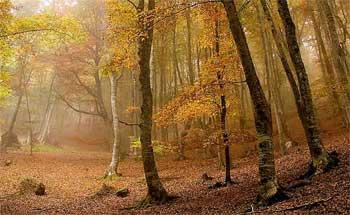 Bosque de hayedos La Rioja