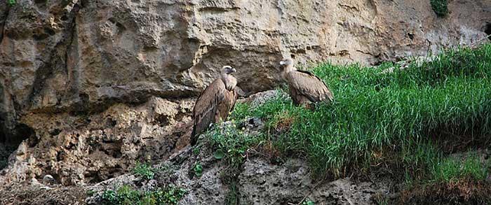 Reserva Natural del Buitre Leonardo