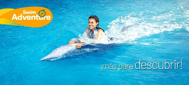 Nadar entre delfines Puerto Vallarta